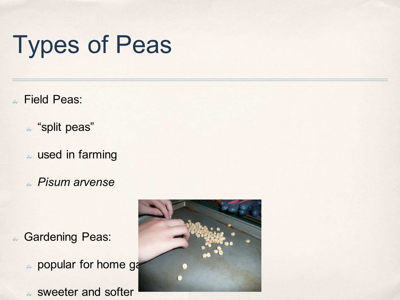 Types of Peas ✤ Field Peas: ✤ split peas ✤ used in farming ✤ Pisum arvense ✤ Gardening Peas: ✤ popular for home gardeners ✤ sweeter and softer ✤ Pisum sativum