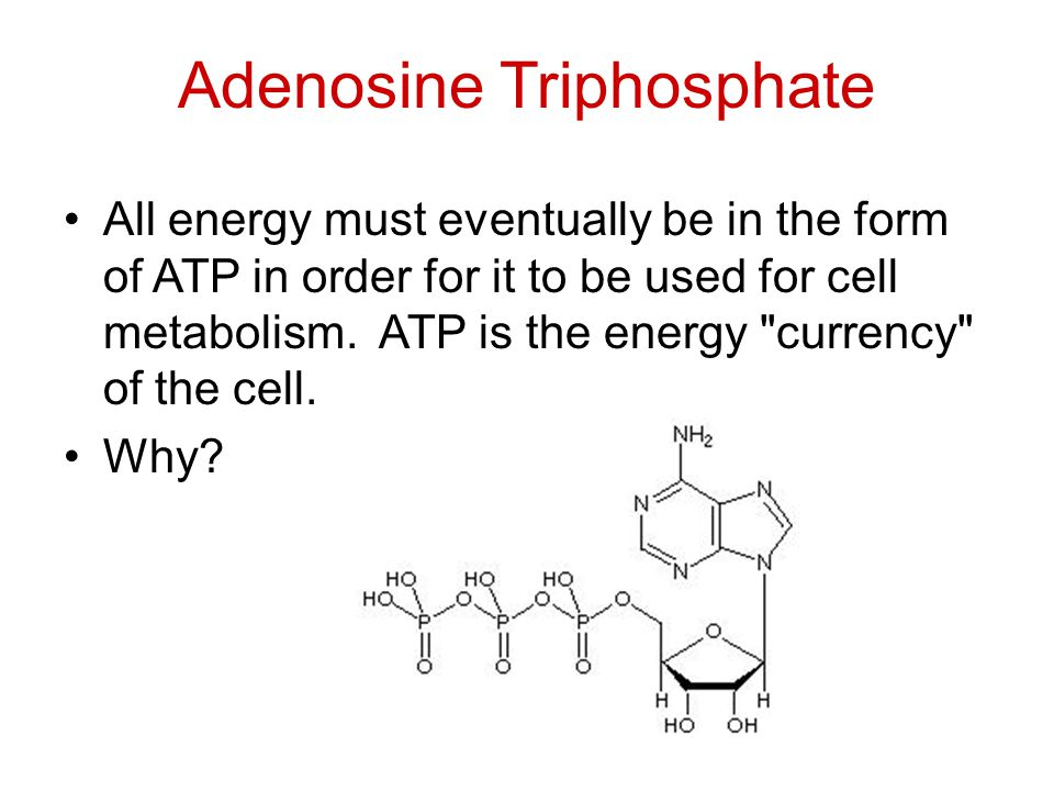 Adenosine Triphosphate All energy must eventually be in the form of ATP in order for it to be used for cell metabolism.