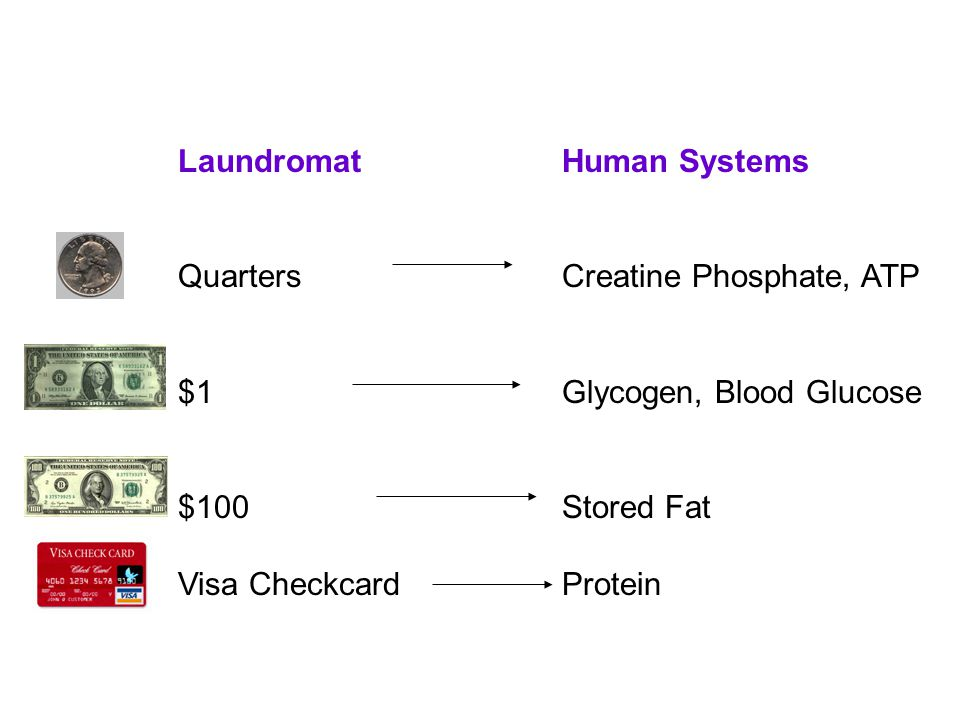 LaundromatHuman Systems QuartersCreatine Phosphate, ATP $1Glycogen, Blood Glucose $100Stored Fat Visa CheckcardProtein