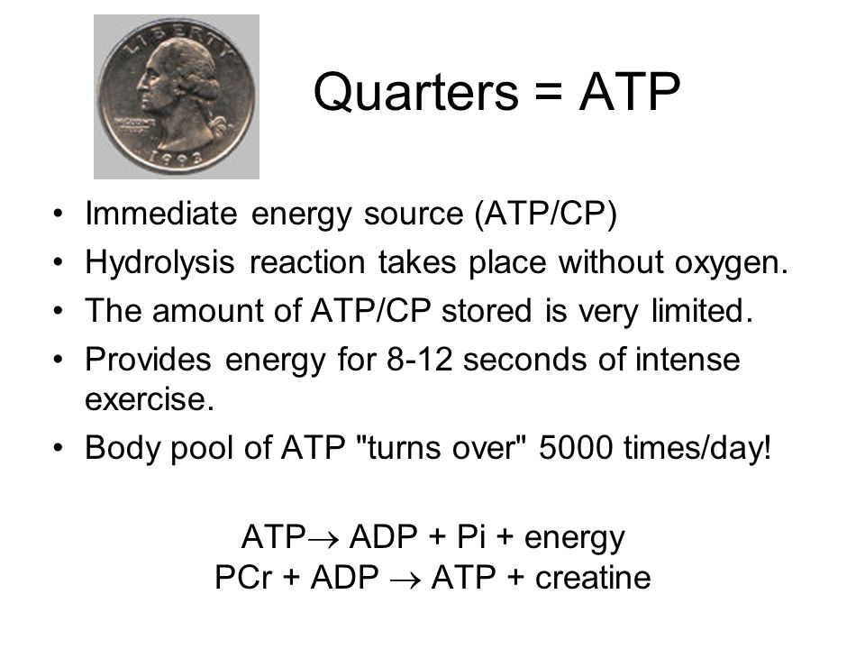 Quarters = ATP Immediate energy source (ATP/CP) Hydrolysis reaction takes place without oxygen.