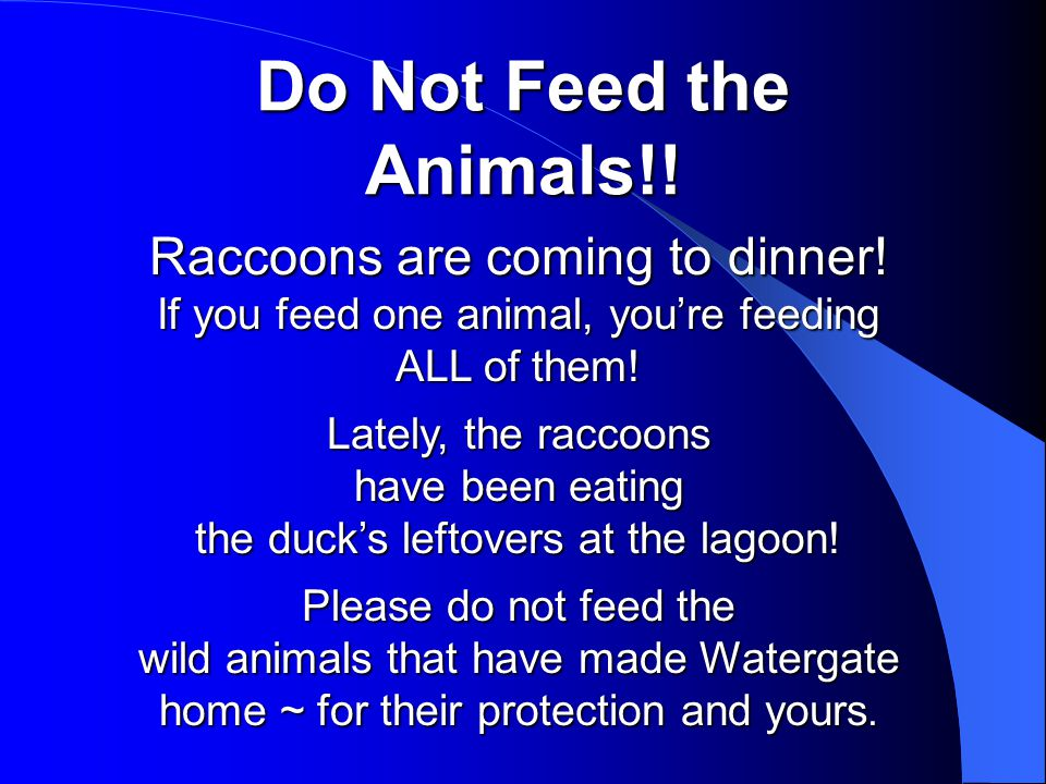 Do Not Feed the Animals!. Raccoons are coming to dinner.