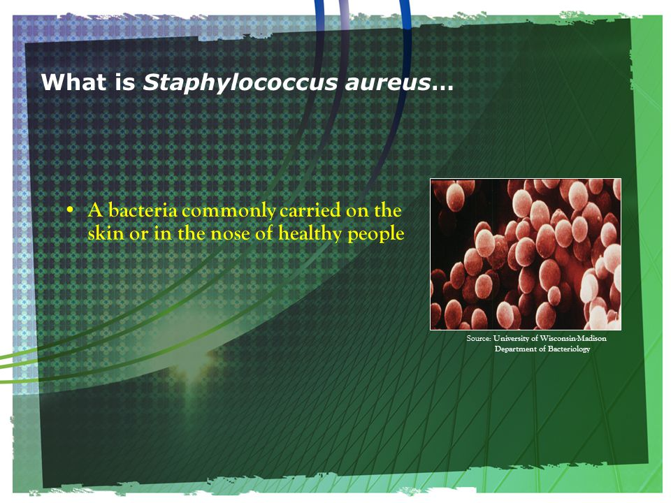 What is Staphylococcus aureus… A bacteria commonly carried on the skin or in the nose of healthy people Source: University of Wisconsin-Madison Department of Bacteriology