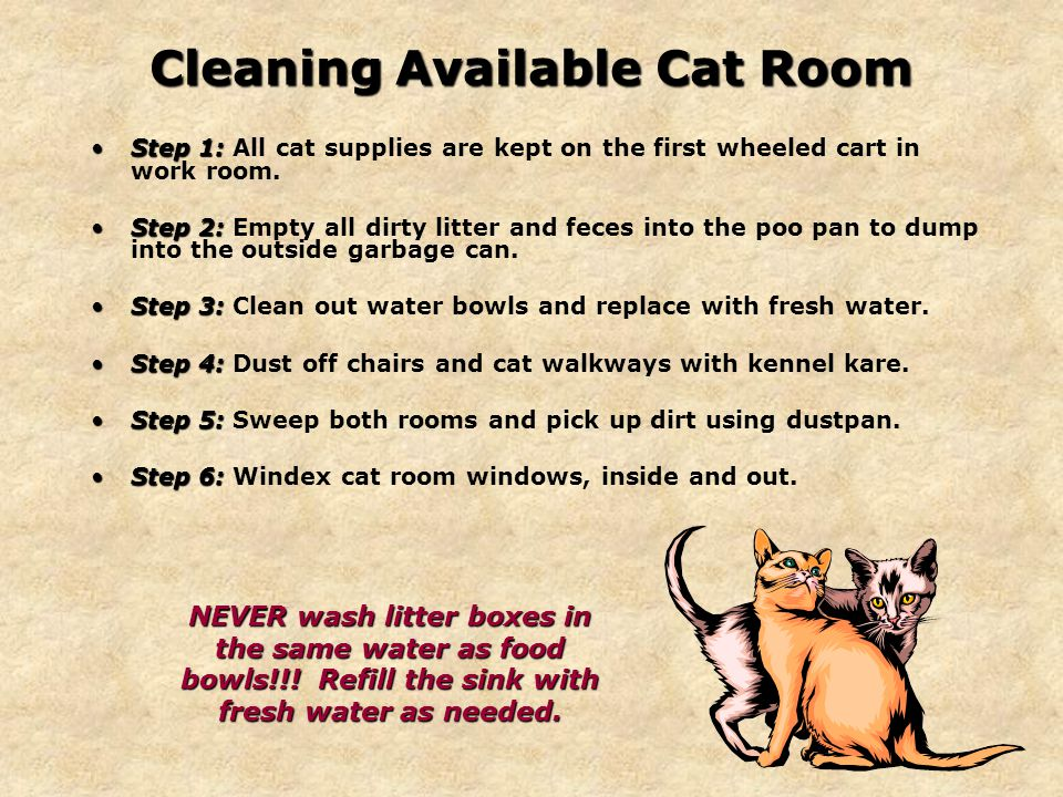 Cleaning Available Cat Room Step 1:Step 1: All cat supplies are kept on the first wheeled cart in work room.