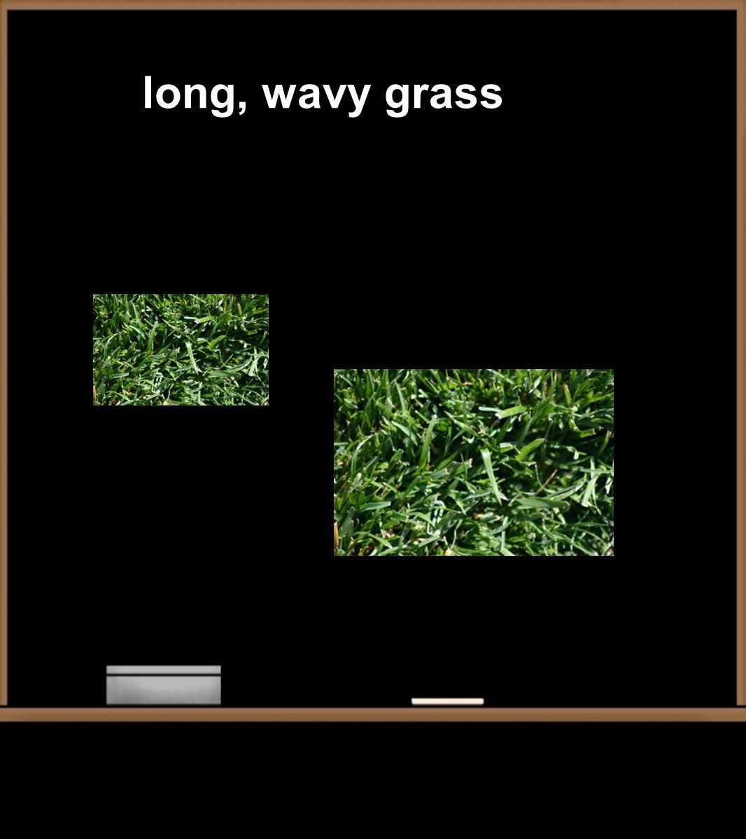 long, wavy grass