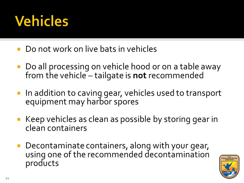  Do not work on live bats in vehicles  Do all processing on vehicle hood or on a table away from the vehicle – tailgate is not recommended  In addition to caving gear, vehicles used to transport equipment may harbor spores  Keep vehicles as clean as possible by storing gear in clean containers  Decontaminate containers, along with your gear, using one of the recommended decontamination products 21