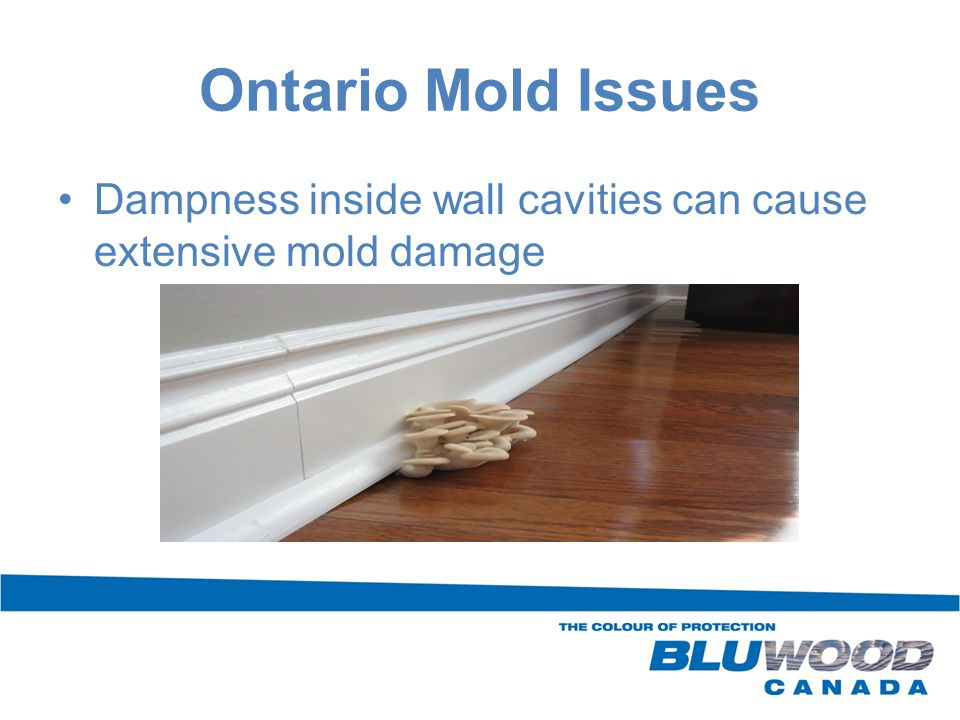Dampness inside wall cavities can cause extensive mold damage Ontario Mold Issues