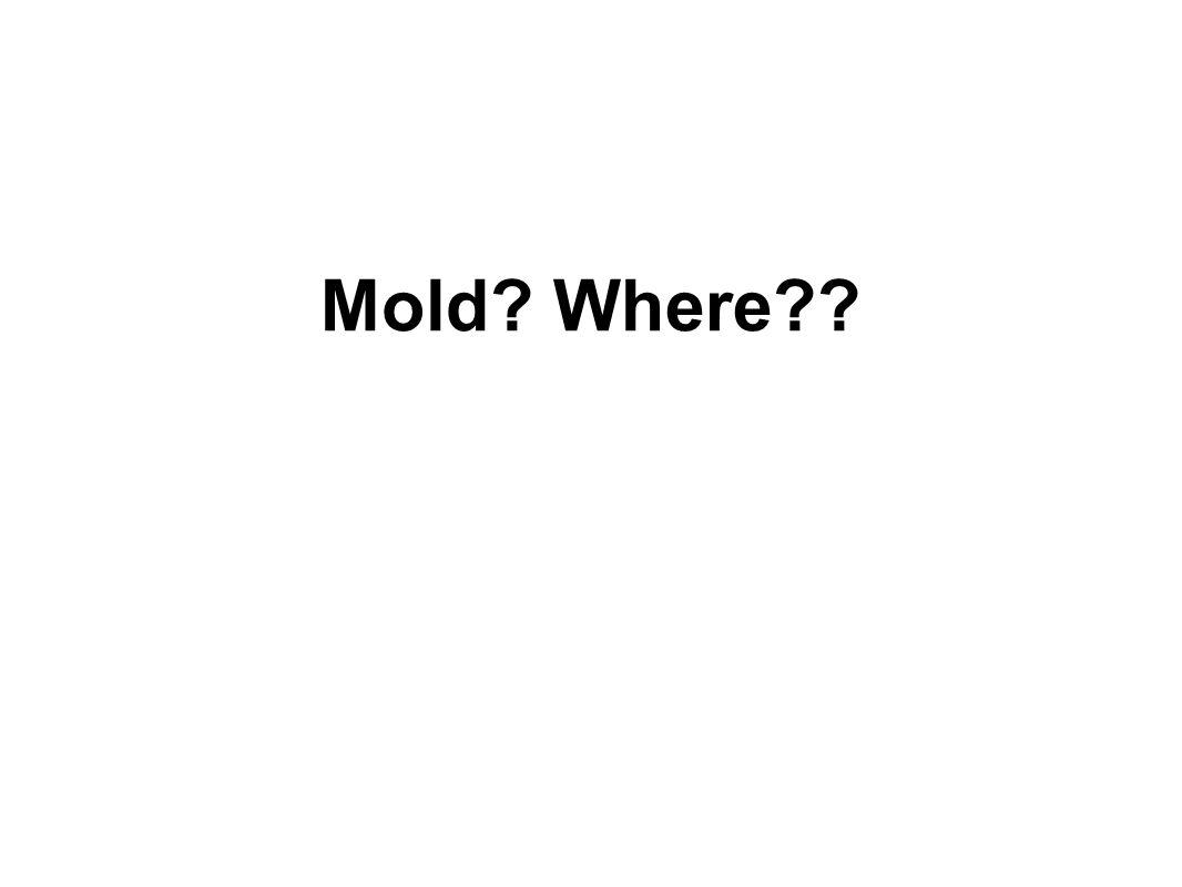 Mold? Where??