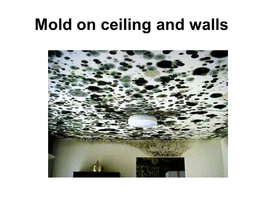 Mold on ceiling and walls
