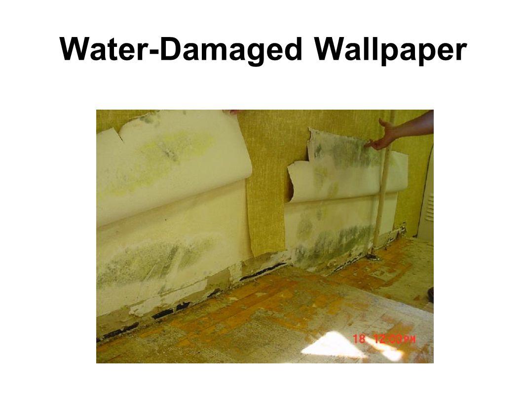 Water-Damaged Wallpaper