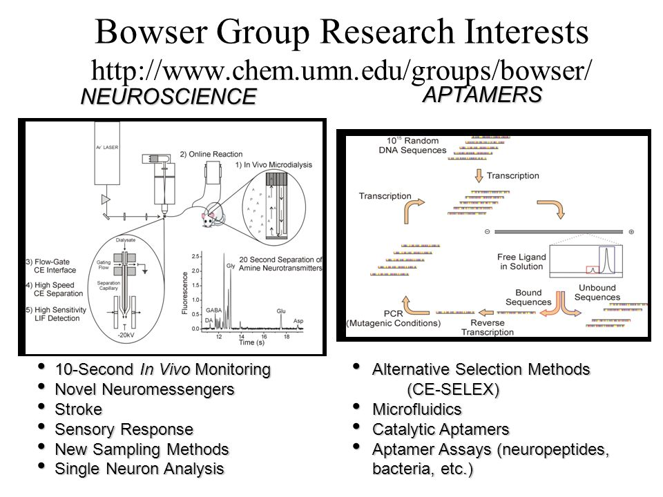 Bowser Group Research Interests http://www.chem.umn.edu/groups/bowser/ NEUROSCIENCE APTAMERS 10-Second In Vivo Monitoring 10-Second In Vivo Monitoring Novel Neuromessengers Novel Neuromessengers Stroke Stroke Sensory Response Sensory Response New Sampling Methods New Sampling Methods Single Neuron Analysis Single Neuron Analysis Alternative Selection Methods Alternative Selection Methods (CE-SELEX) (CE-SELEX) Microfluidics Microfluidics Catalytic Aptamers Catalytic Aptamers Aptamer Assays (neuropeptides, bacteria, etc.) Aptamer Assays (neuropeptides, bacteria, etc.)