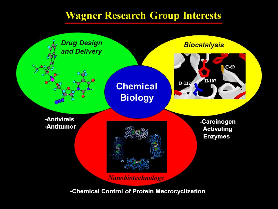 Biocatalysis Chemical Biology Nanobiotechnology C-69 H-107 D-122 Drug Design and Delivery -Antivirals -Antitumor -Carcinogen Activating Enzymes -Chemical Control of Protein Macrocyclization Wagner Research Group Interests