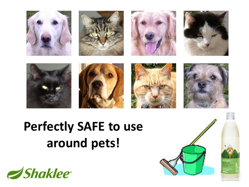 Perfectly SAFE to use around pets!