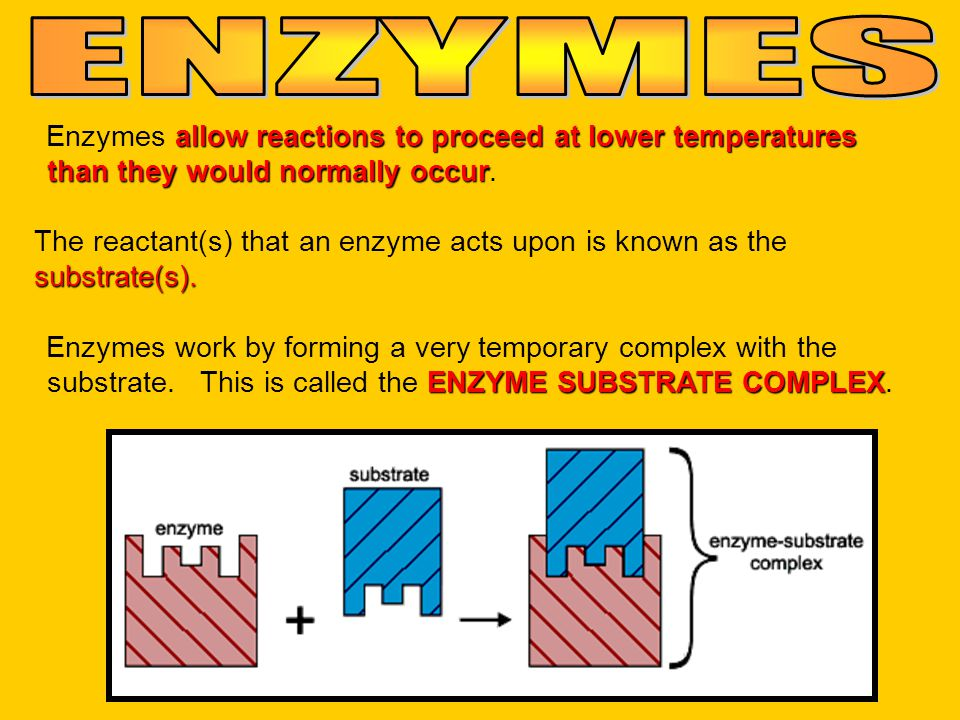 Enzymes a aa allow reactions to proceed at lower temperatures than they would normally occur. The reactant(s) that an enzyme acts upon is known as the