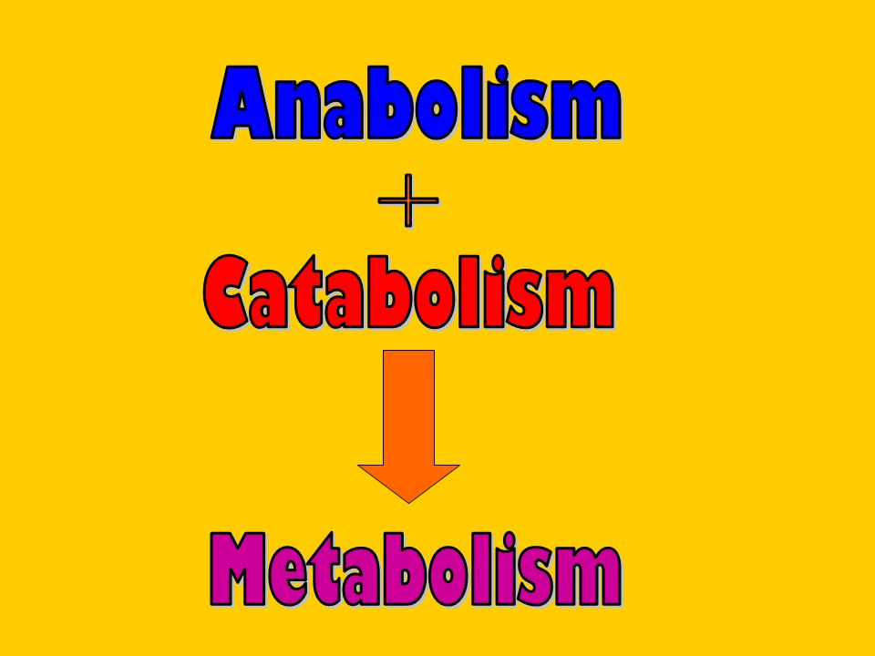 Metabolism chemical reactionsDefinition: Metabolism is the constantly occurring chemical reactions that take place in a cell.