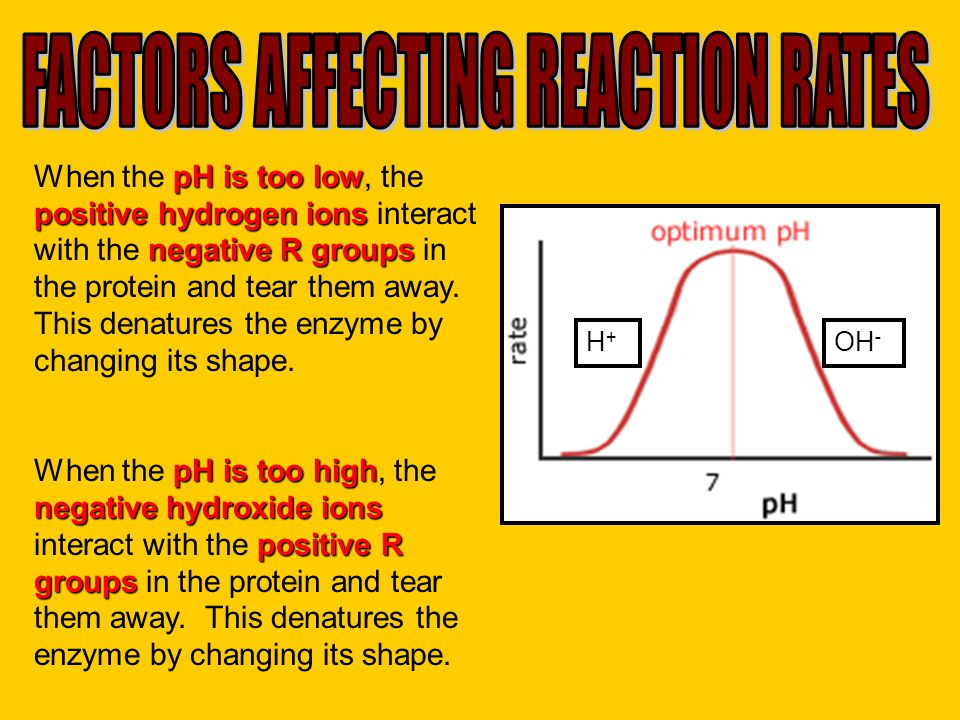 pH is too low positive hydrogen ions negative R groups When the pH is too low, the positive hydrogen ions interact with the negative R groups in the p