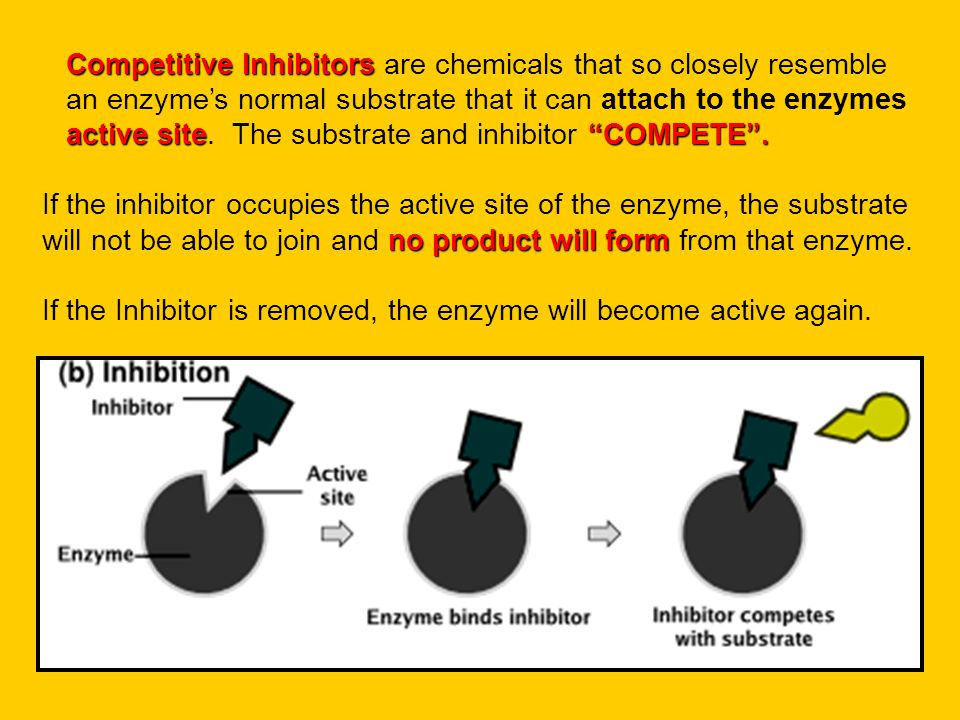 "Competitive Inhibitors active site""COMPETE"". Competitive Inhibitors are chemicals that so closely resemble an enzyme's normal substrate that it can at"