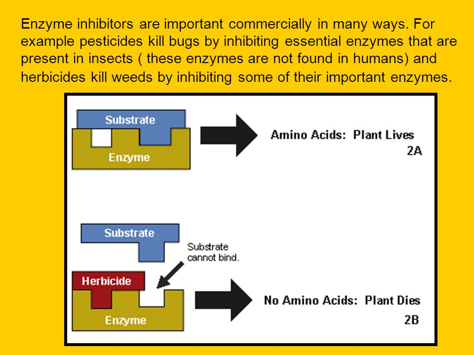 Enzyme inhibitors are important commercially in many ways. For example pesticides kill bugs by inhibiting essential enzymes that are present in insect