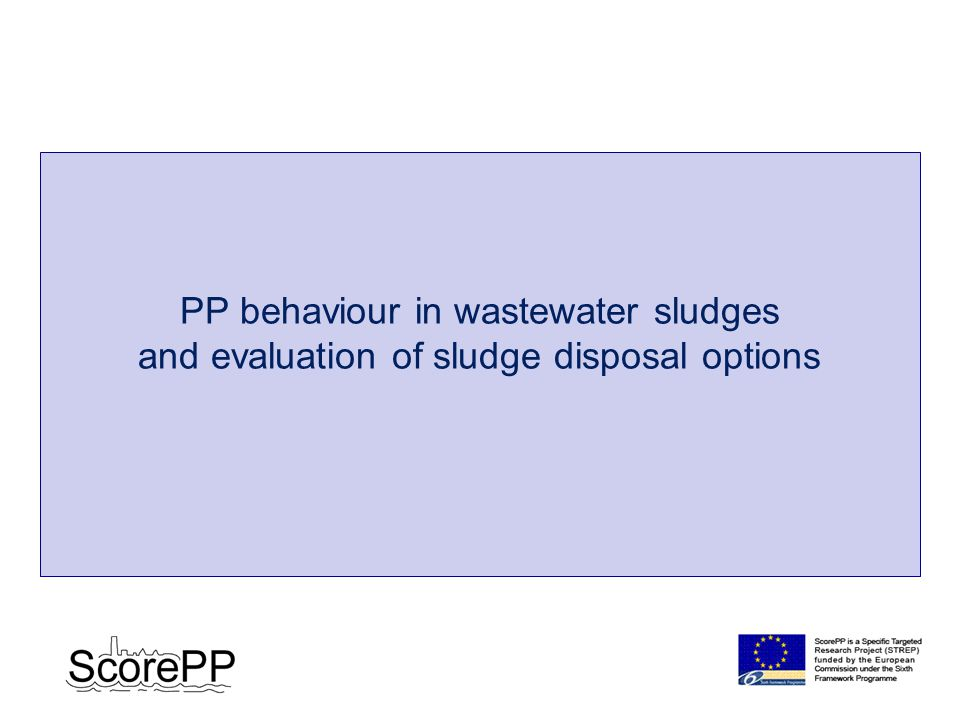 PP behaviour in wastewater sludges and evaluation of sludge disposal options