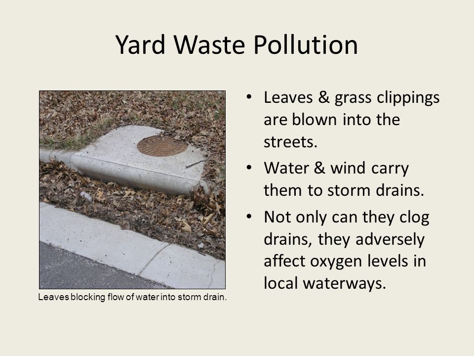 Yard Waste Pollution Leaves & grass clippings are blown into the streets. Water & wind carry them to storm drains. Not only can they clog drains, they