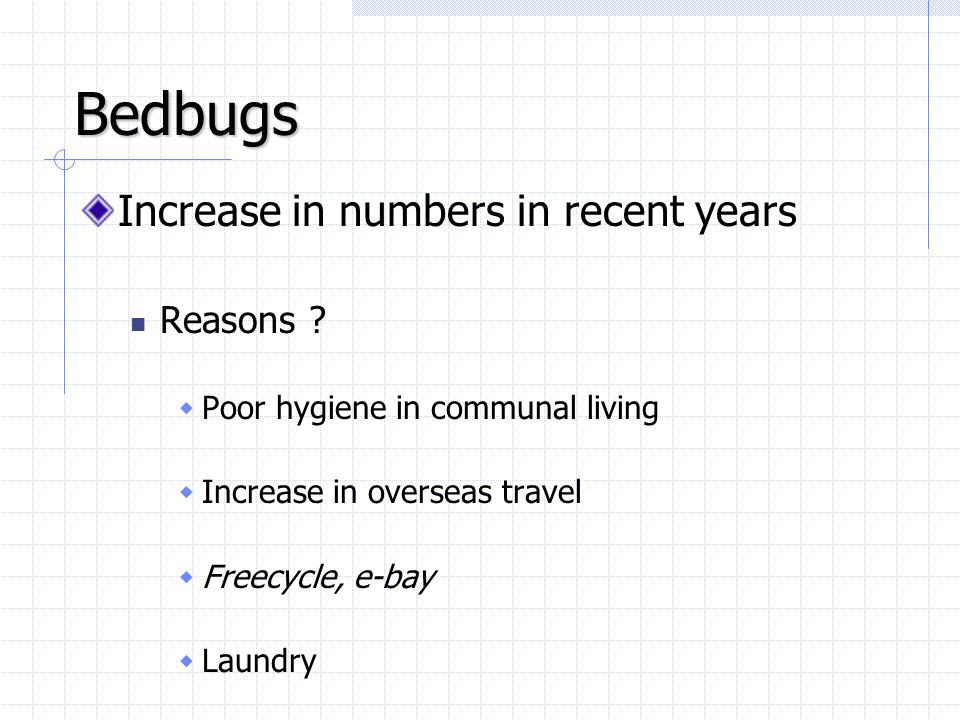 Bedbugs Increase in numbers in recent years Reasons ?  Poor hygiene in communal living  Increase in overseas travel  Freecycle, e-bay  Laundry