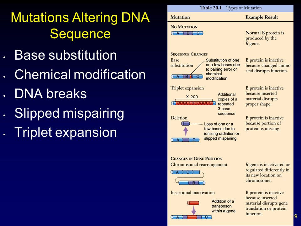 19 Mutations Altering DNA Sequence Base substitution Chemical modification DNA breaks Slipped mispairing Triplet expansion
