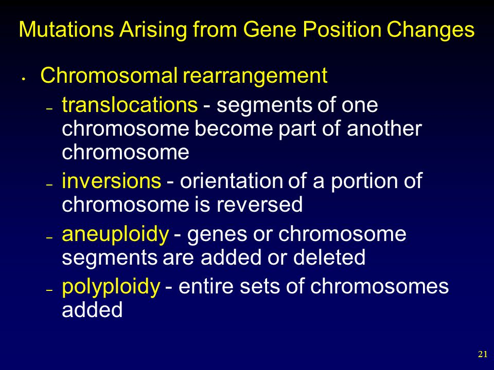 21 Mutations Arising from Gene Position Changes Chromosomal rearrangement – translocations - segments of one chromosome become part of another chromosome – inversions - orientation of a portion of chromosome is reversed – aneuploidy - genes or chromosome segments are added or deleted – polyploidy - entire sets of chromosomes added