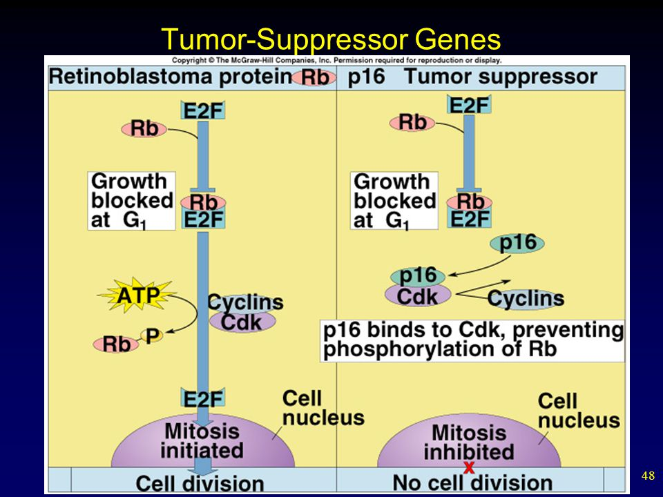 48 Tumor-Suppressor Genes