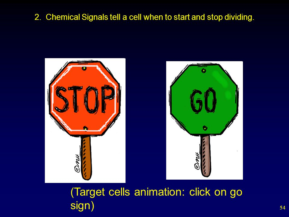 54 2. Chemical Signals tell a cell when to start and stop dividing.
