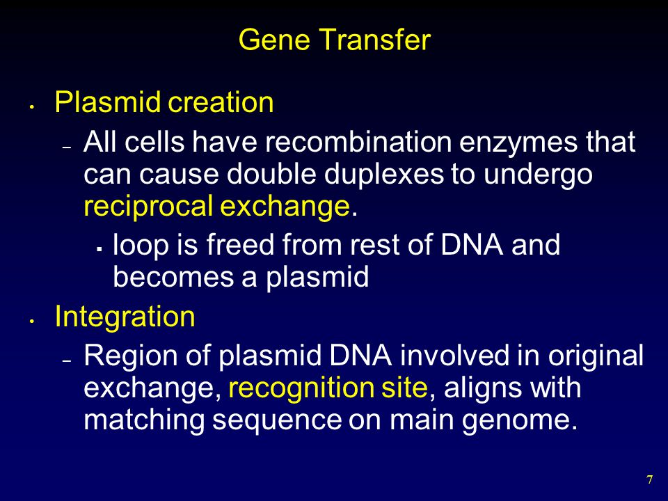 7 Gene Transfer Plasmid creation – All cells have recombination enzymes that can cause double duplexes to undergo reciprocal exchange.