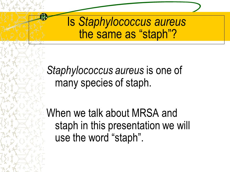 """Is Staphylococcus aureus the same as """"staph""""? Staphylococcus aureus is one of many species of staph. When we talk about MRSA and staph in this present"""