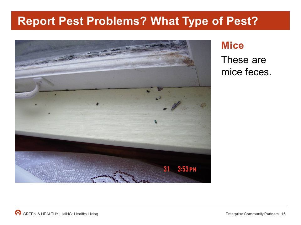 Enterprise Community Partners | 16GREEN & HEALTHY LIVING: Healthy Living Mice These are mice feces.
