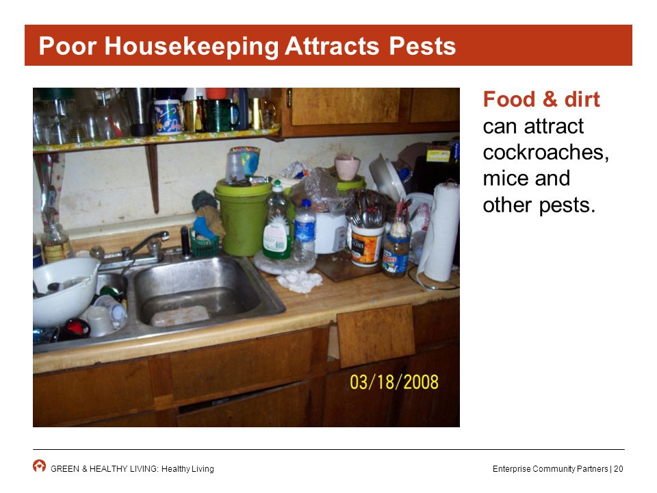 Enterprise Community Partners | 20GREEN & HEALTHY LIVING: Healthy Living Food & dirt can attract cockroaches, mice and other pests.