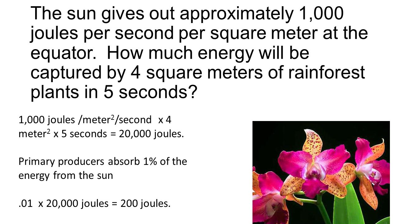 1,000 joules /meter 2 /second x 4 meter 2 x 5 seconds = 20,000 joules. Primary producers absorb 1% of the energy from the sun.01 x 20,000 joules = 200
