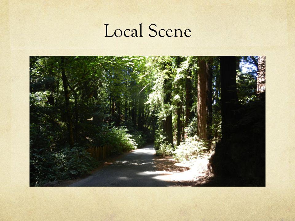 Local Scene