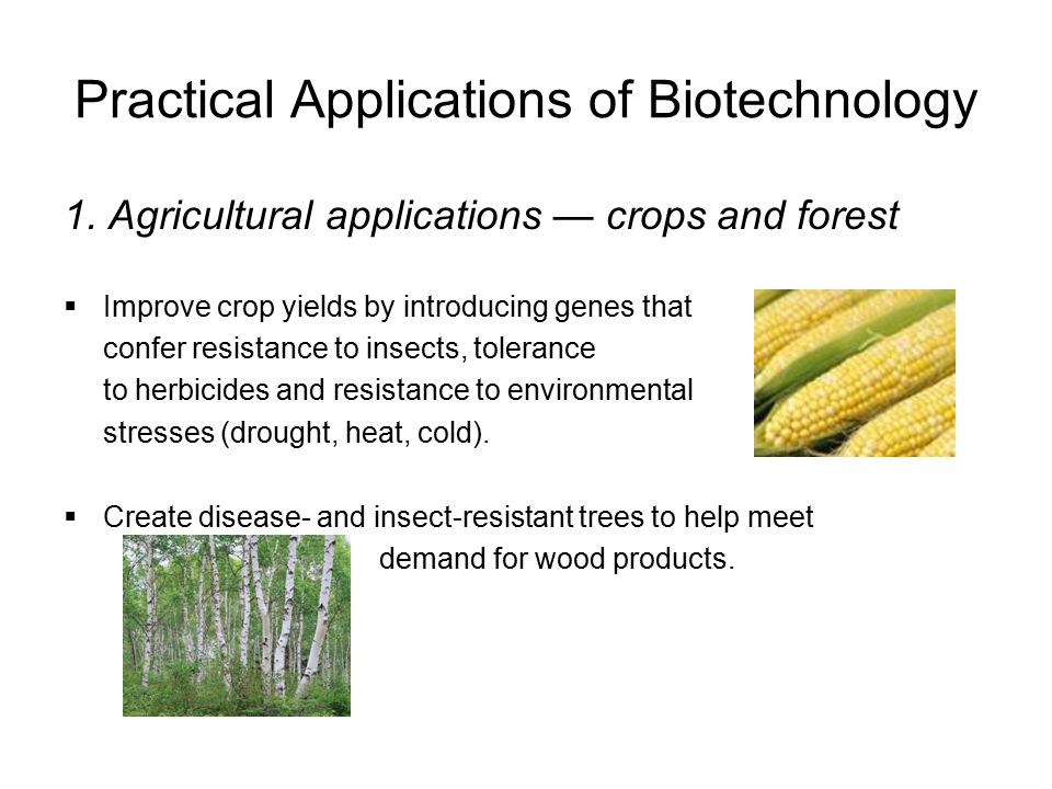 Practical Applications of Biotechnology 1. Agricultural applications — crops and forest  Improve crop yields by introducing genes that confer resista