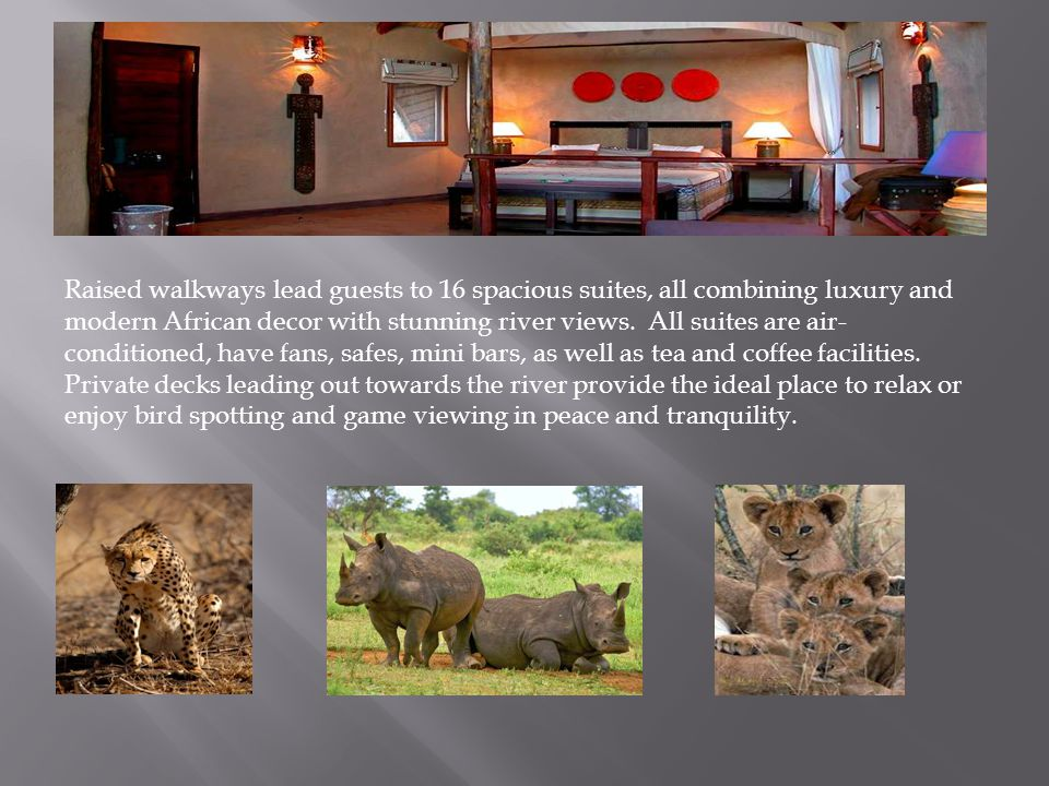 OPTION 4: LUKIMBI SAFARI LODGE - KRUGER NATIONAL PARK Kruger is home to the Big Five and a wide variety of other animals and birds, which roam freely in their natural habitat.