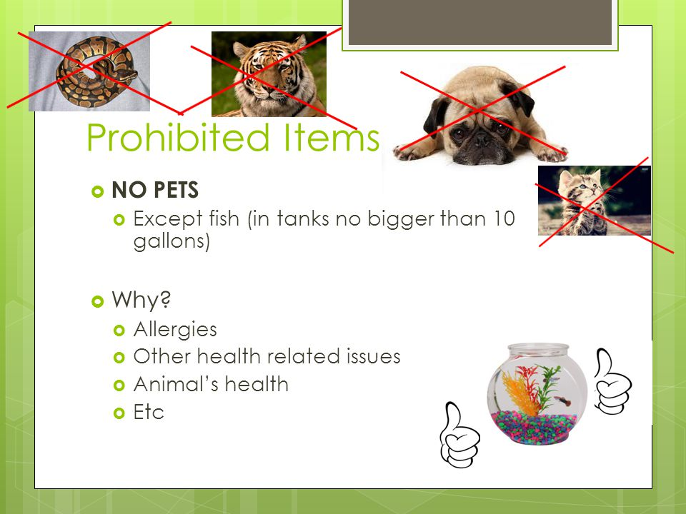 Prohibited Items  NO PETS  Except fish (in tanks no bigger than 10 gallons)  Why?  Allergies  Other health related issues  Animal's health  Etc