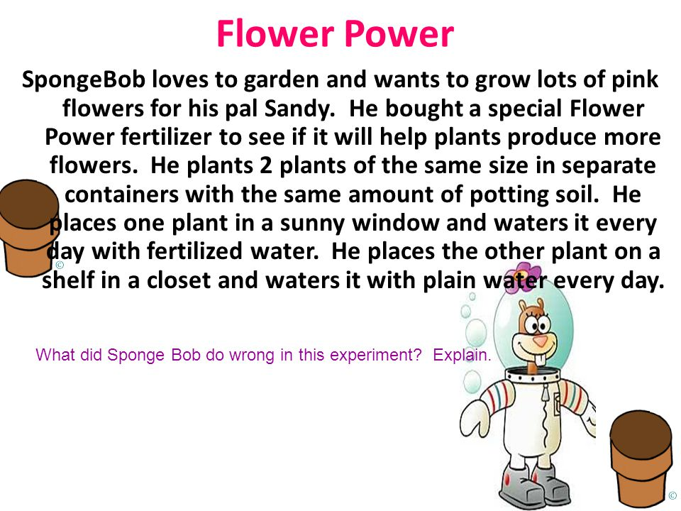 Flower Power SpongeBob loves to garden and wants to grow lots of pink flowers for his pal Sandy.