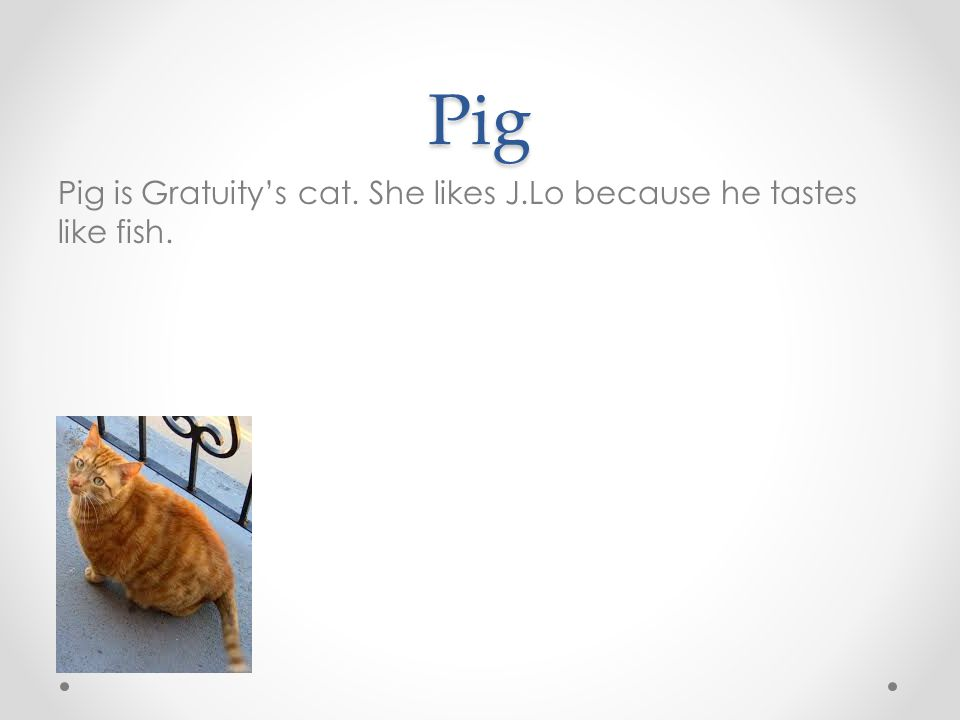 Pig Pig is Gratuity's cat. She likes J.Lo because he tastes like fish.