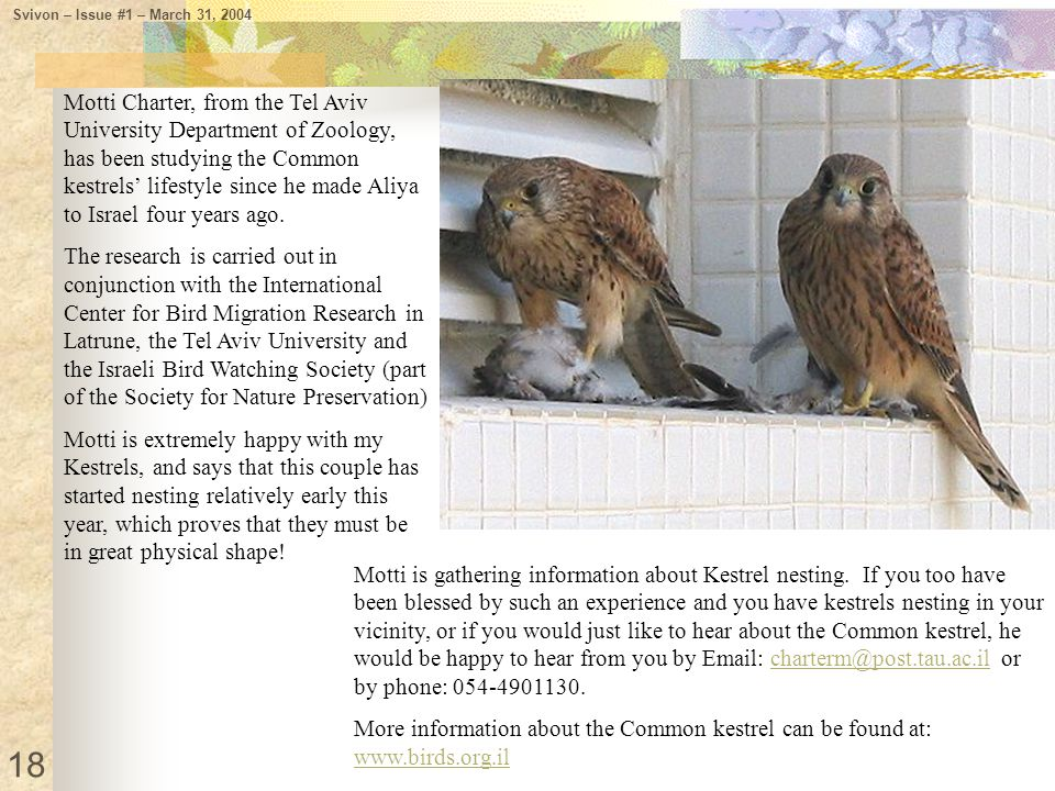 Motti is gathering information about Kestrel nesting. If you too have been blessed by such an experience and you have kestrels nesting in your vicinit