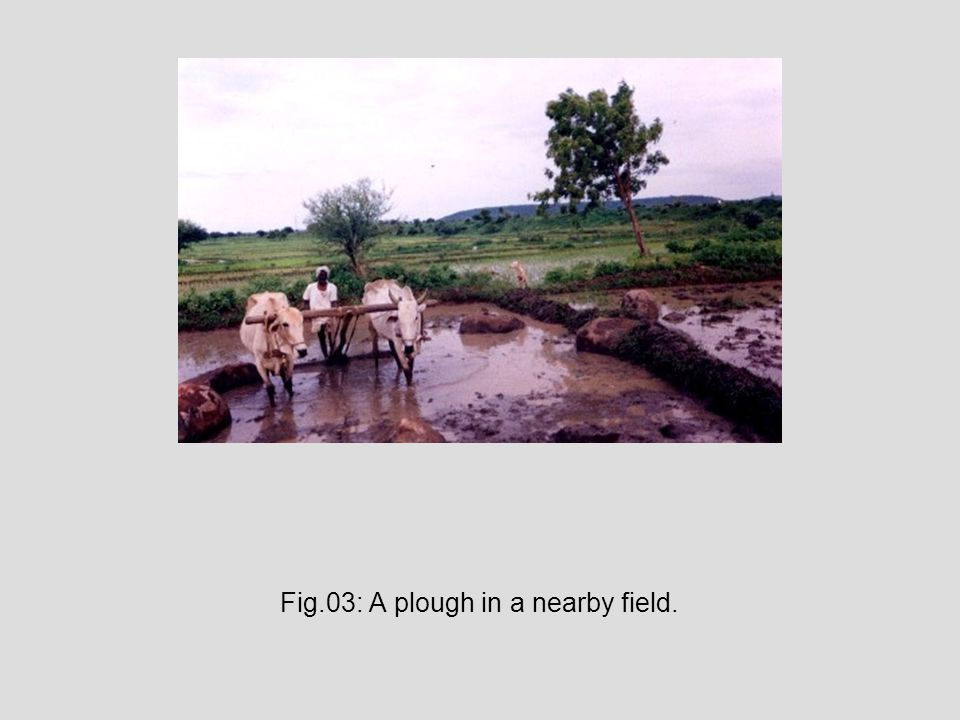 Fig.03: A plough in a nearby field.