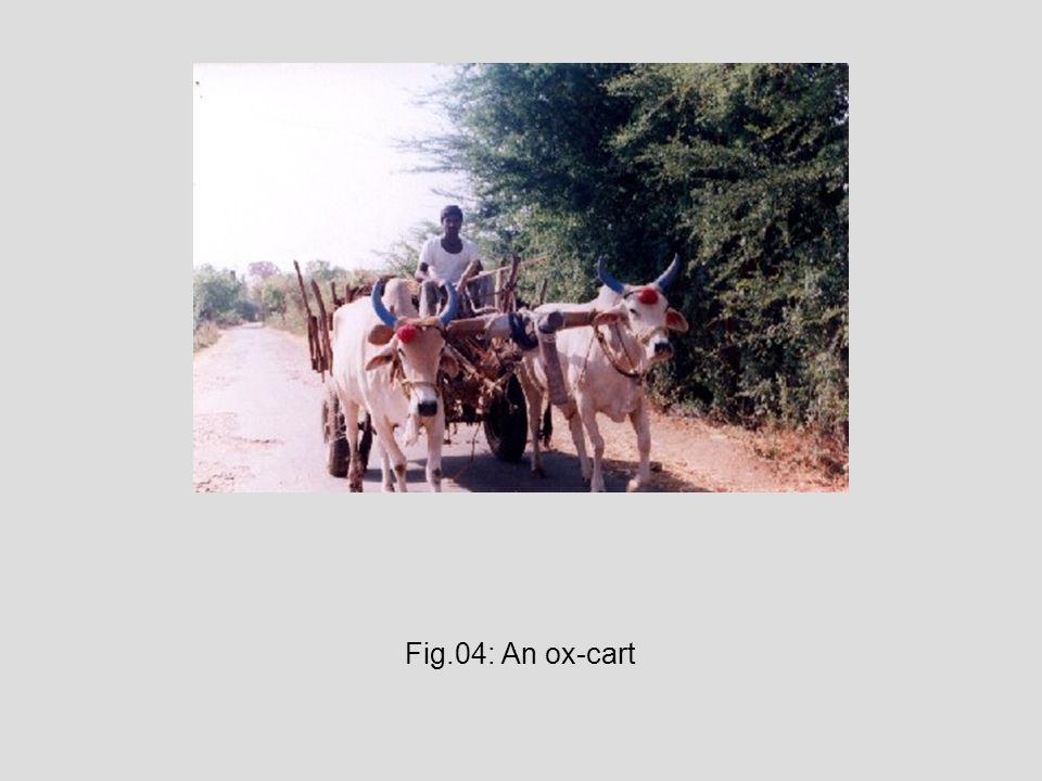 Fig.04: An ox-cart