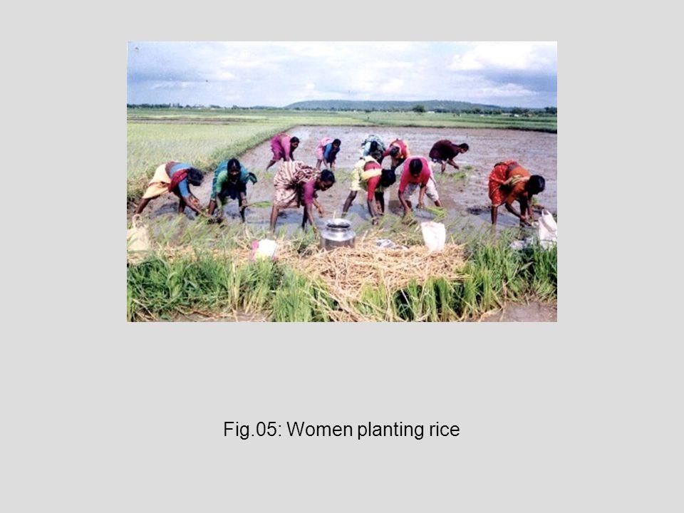 Fig.05: Women planting rice