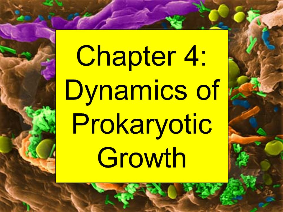 Chapter 4: Dynamics of Prokaryotic Growth