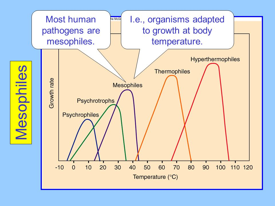 Mesophiles Most human pathogens are mesophiles.