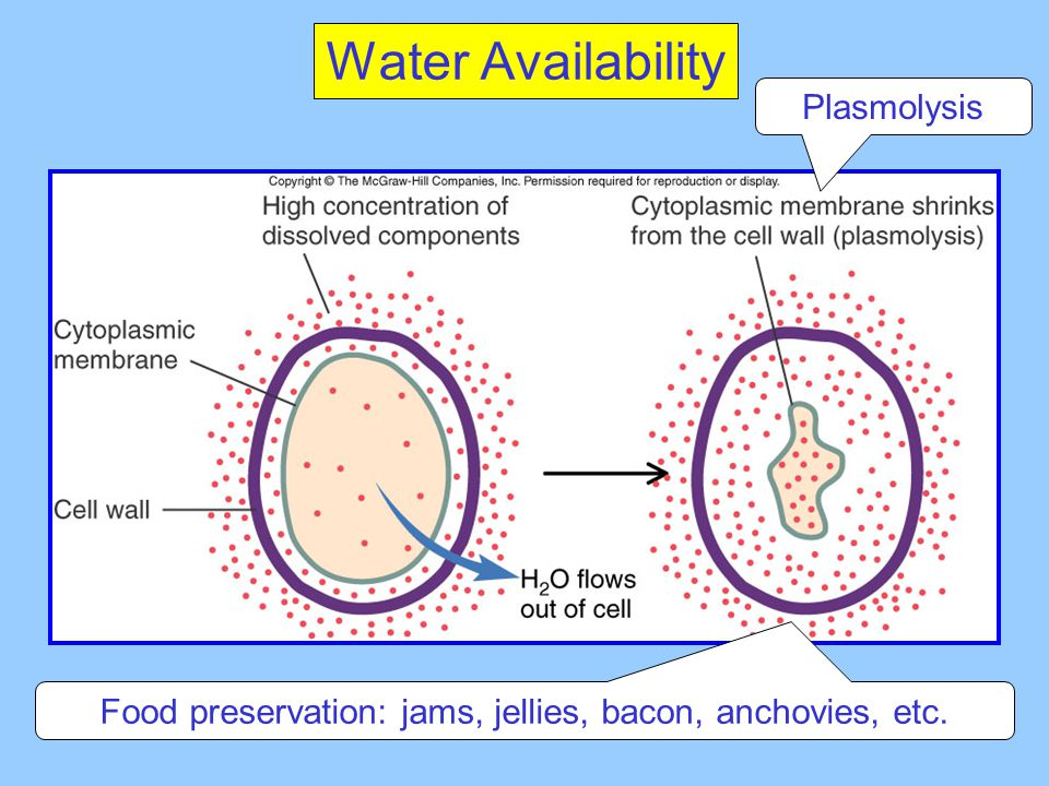 Water Availability Plasmolysis Food preservation: jams, jellies, bacon, anchovies, etc.
