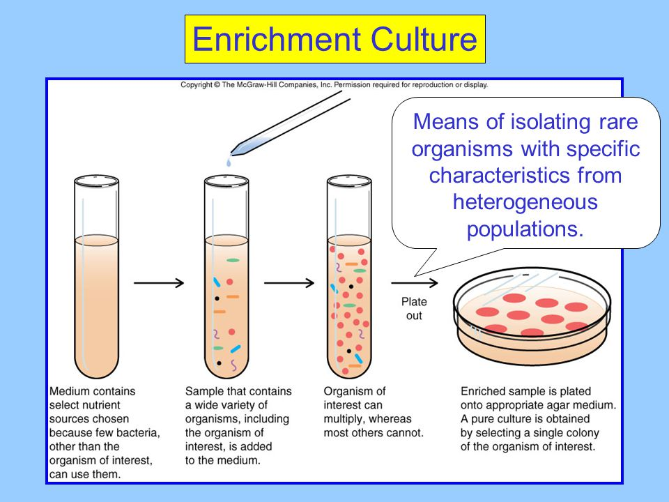 Enrichment Culture Means of isolating rare organisms with specific characteristics from heterogeneous populations.