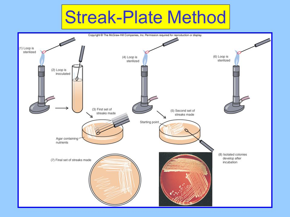 Streak-Plate Method