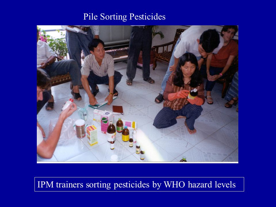 IPM trainers sorting pesticides by WHO hazard levels Pile Sorting Pesticides