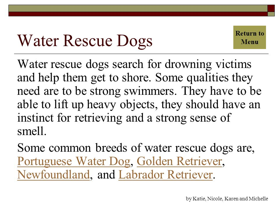 Water Rescue Dogs Water rescue dogs search for drowning victims and help them get to shore.